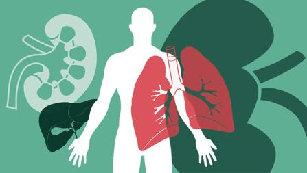 Image 4-Donate an organ